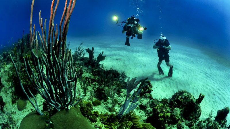 Top 3 Underwater Activities to Try For Your Adrenaline Rush
