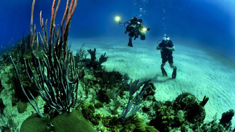 Top 3 Underwater Activities to Try For Your Adrenaline Rush